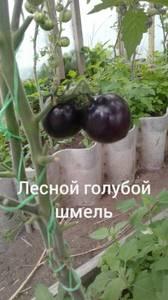 Polish_20200725_114605400.jpg
