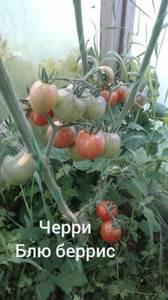 Polish_20200725_130033843.jpg