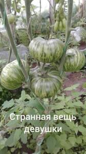Polish_20200725_130617855.jpg