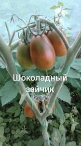 Polish_20200725_130914118.jpg