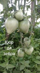Polish_20200725_131716109.jpg