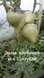 Polish_20200725_131936587.jpg