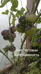Polish_20200725_132212469.jpg