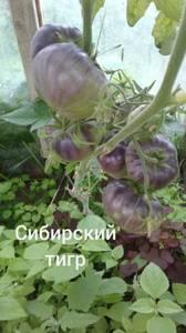 Polish_20200725_132322082.jpg