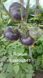 Polish_20200725_132427472.jpg