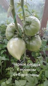 Polish_20200725_132815685.jpg