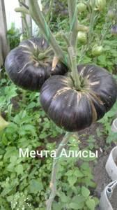 Polish_20200725_132945355.jpg