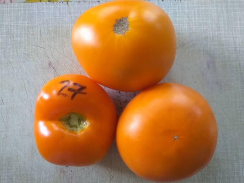 томат Бочка меда.jpg