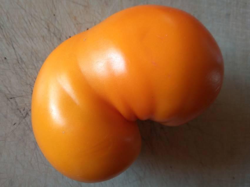 томат Оранжевый гигант Дмитриева.jpg