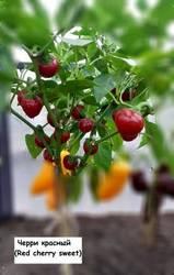 Черри красный (Red cherry sweet) ..jpg