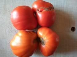 томат Томато.jpg