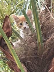 Сочинские пальмовые коты