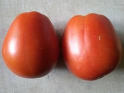 томат Ругантино F2.jpg