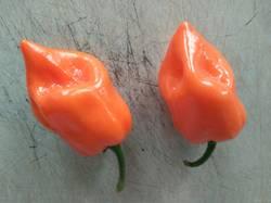 перец острый №2 оранжевые фонарики очень душистый_р.jpg