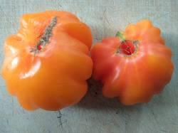 томат Флорентийская красавица.jpg