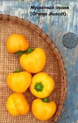 Мускатный оранж (Orange Muscat)..jpg