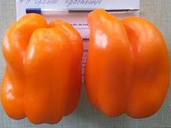 перец сладкий Оранжевая красавица.jpg