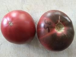 томат Черно-голубой хребет.jpg