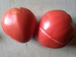 томат Медено серце.jpg