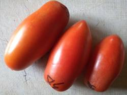 томаты Засолочные пучки.jpg