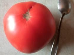 томат не БС Удаловой.jpg