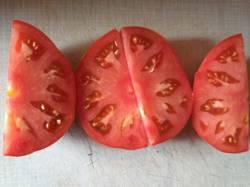 томат не БС Удаловой_р1.jpg