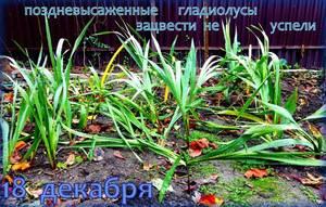IMG_20201218_142201_9.jpg