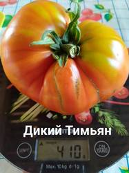 дикий тимьян20200802.jpg