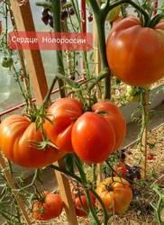 Сердце  Новороссии