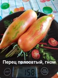 Dwarf Pepper like striped20200727.jpg