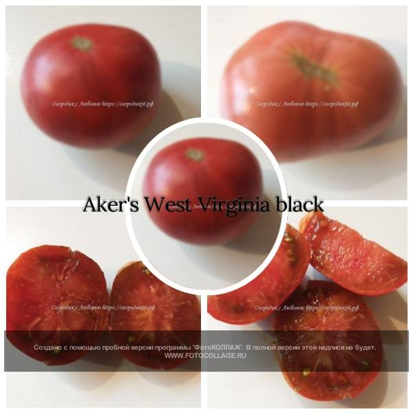 Aker's West Virginia black