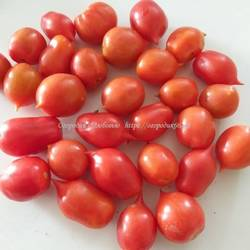 Поцелуй герани (Geranium Kiss ) картоф лист
