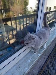 два кота)))