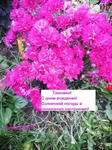 Хризантема мультифлора5 - копия.jpg