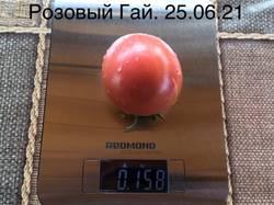 Розовый Гай. Семена от Ларисы (CUCSA). 25 июня. Высота куста в ОГ 80 см