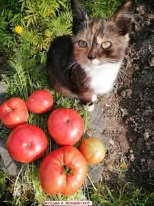 Йошкин  кот.jpg