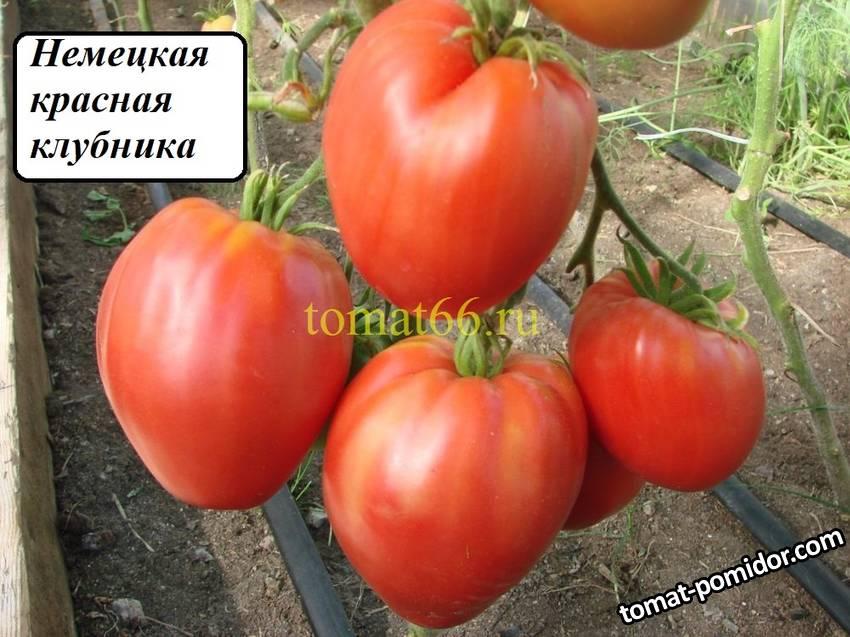 Немецкая красная клубника (7).JPG