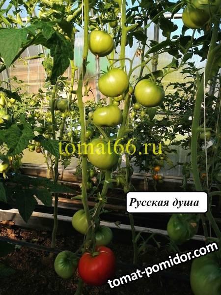 Русская душа (5).jpg