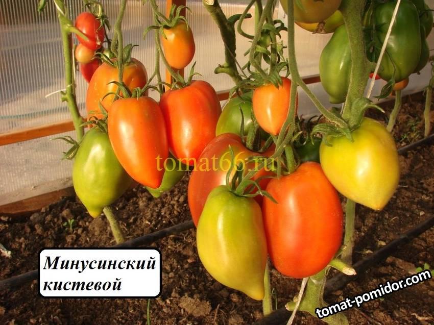 Минусинский кистевой (1).JPG