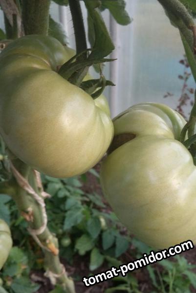Персики и крем.