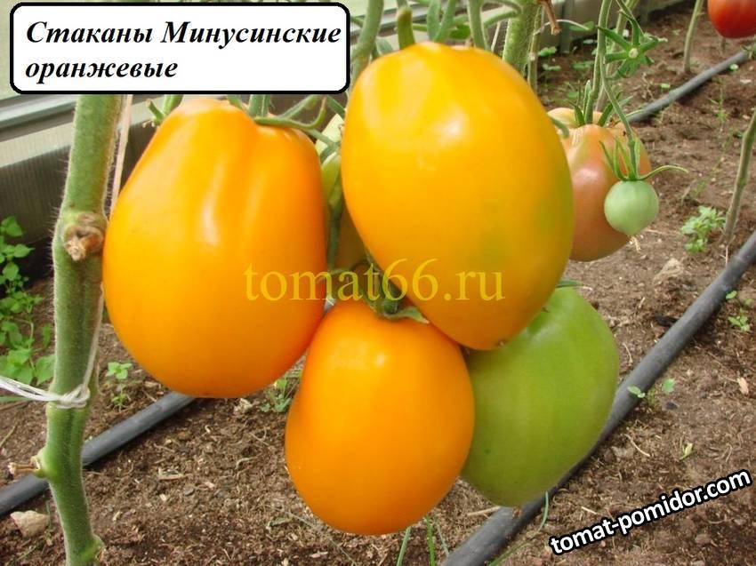 Стаканы Минусинские оранжевые (5).JPG