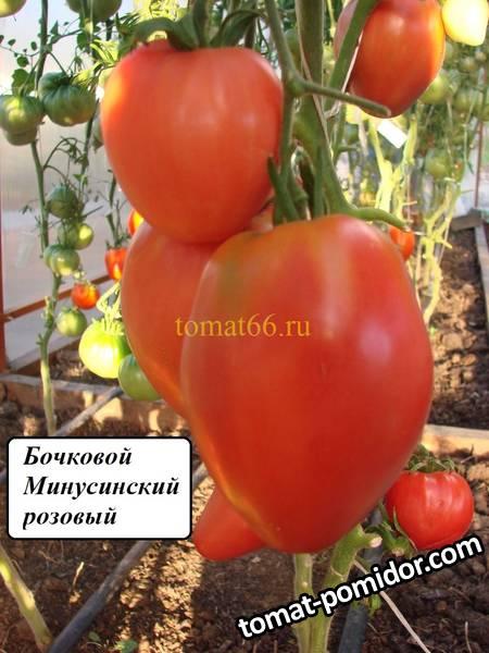 Бочковой Минусинский розовый (1).JPG