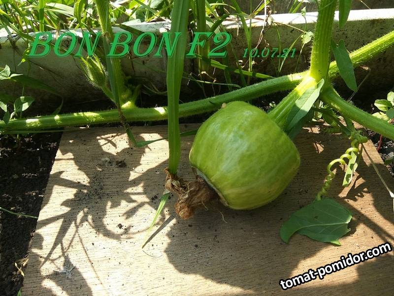 10 июля  Bon Bon F2 -1.jpg