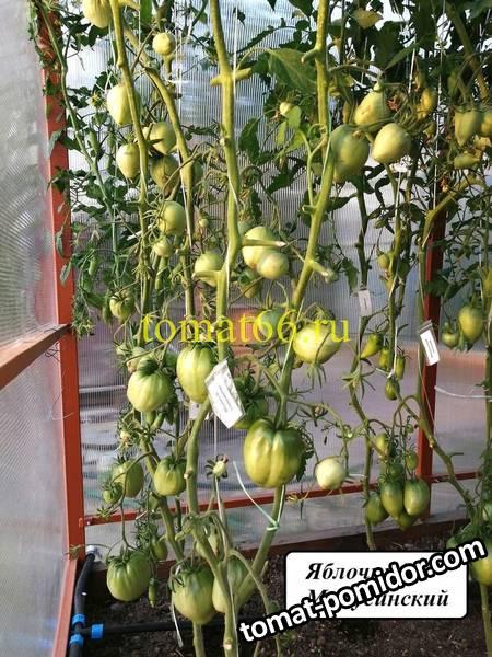 Яблочные Минусинские (2).jpg