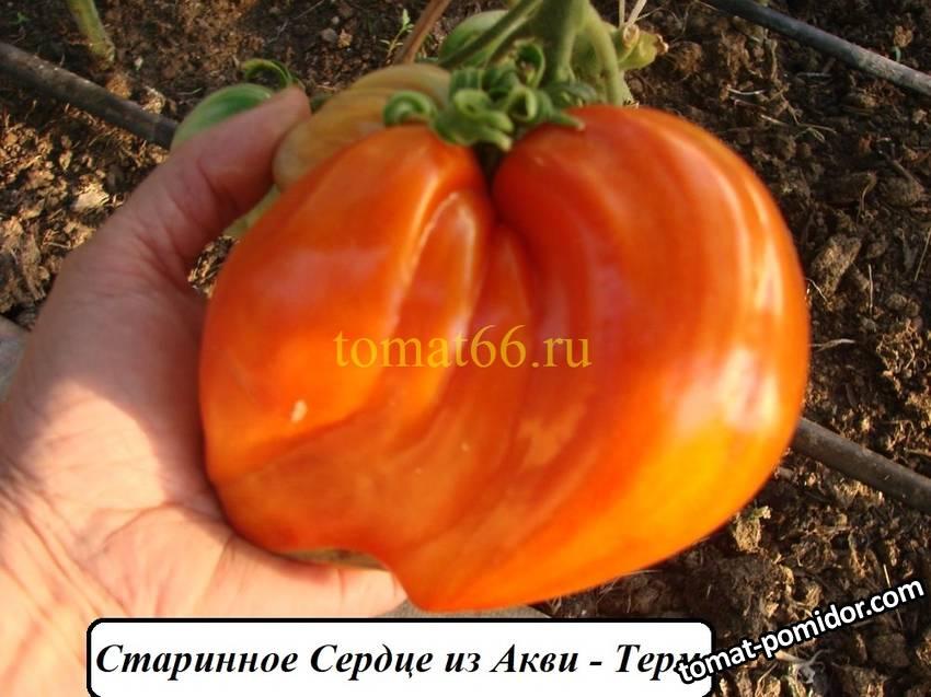 Старинное сердце Акви Терме (2).JPG