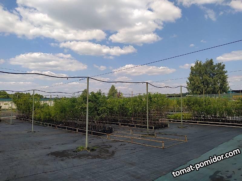 Егорьевский ТК плодовые
