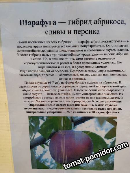 Егорьевский шарафуга