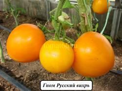 Русский вихрь.JPG