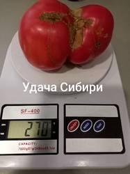 Удача Сибири
