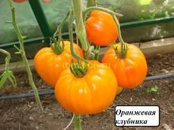 Оранжевая клубника (1).JPG